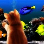 Необыкновенное в нашем доме: аквариумы
