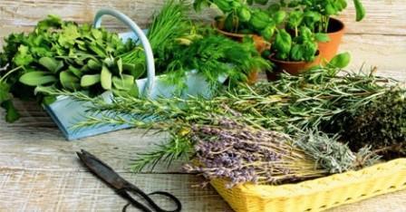 4 травы для очищения организма