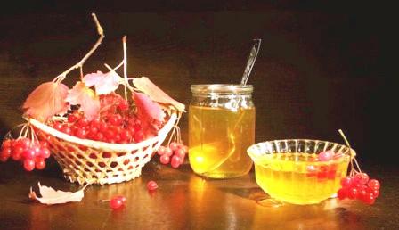 Ягода калина: полезные, лечебные свойства и рецепты применения