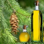 Кедровое масло и терпентиновый бальзам: полезные свойства и противопоказания