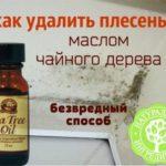 Как удалить плесень маслом чайного дерева: простой безвредный способ