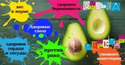 avokado pol'za i vred