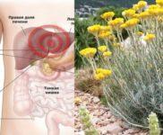 bessmertnik lechebnye svojstva i protivopokazanija