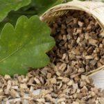 Лечебные свойства дубовой коры, ее применение для лечения. Противопоказание и вред
