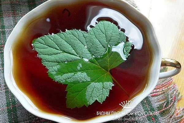 Листья-смородины-полезные-свойства-и-противопоказания