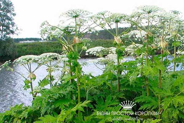 Растение-в-природе
