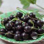 Черная смородина: лечебные свойства и применение в рецептах народной медицины