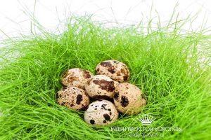 Миниатюра к статье Перепелиное яйцо для лечения различных заболеваний. Польза и вред. Сколько варить и как есть полезный продукт