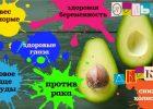 Миниатюра к статье Зачем нам авокадо?