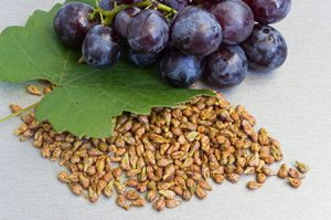 Миниатюра к статье Эликсир молодости из виноградных косточек: старость «гуд бай»!