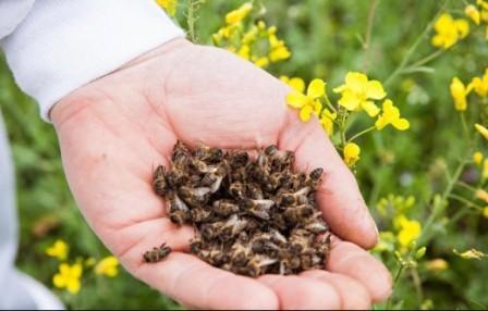 Что такое подмор пчл