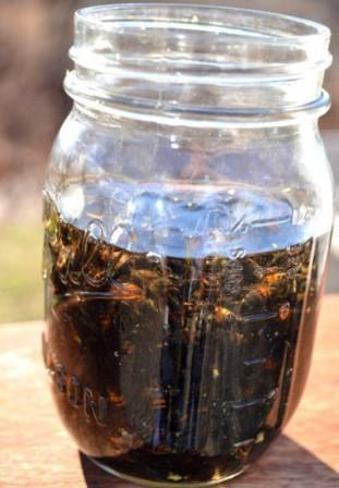 Пчелиный подмор – польза и вред, применение, рецепты - Медицинский портал