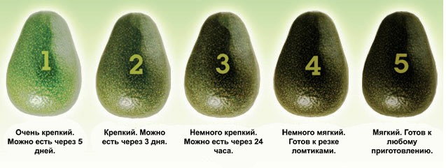 avokado poleznye svojstva i protivopokazanija