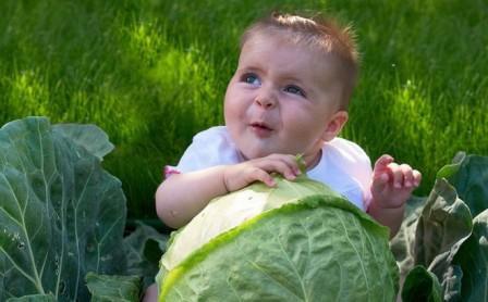 капустный-лист-с-медом-от-кашля-ребенку