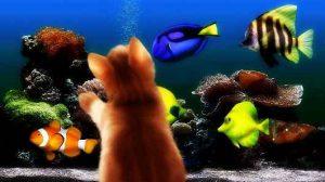 Миниатюра к статье Необыкновенное в нашем доме: аквариумы