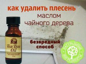 Миниатюра к статье Как удалить плесень маслом чайного дерева: простой безвредный способ