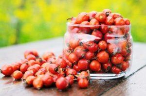 Миниатюра к статье Знакомый всем шиповник, его лечебные свойства и противопоказания. Как заваривать сушеные ягоды: рецепты
