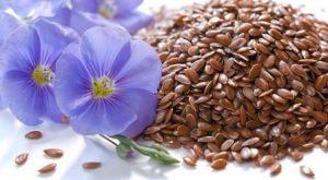 Миниатюра к статье Великое семечко – обычный росток: польза семян льна и противопоказания к употреблению